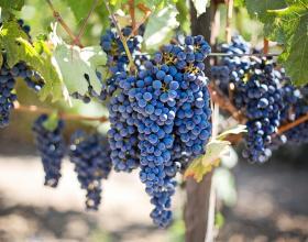 Празници на виното