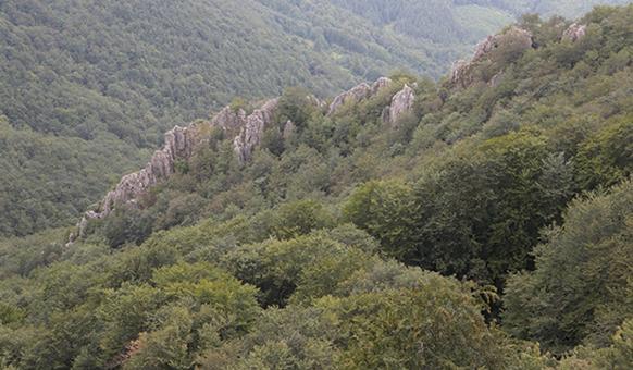 Мъхнатите скали