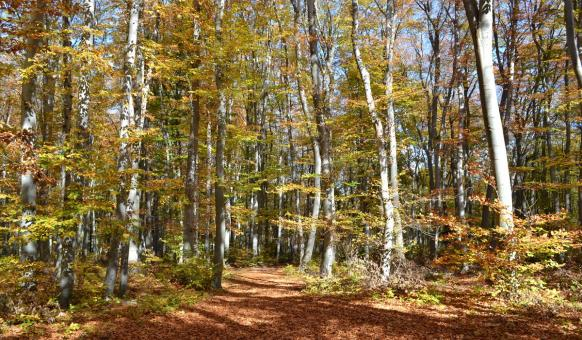 """Природен парк """"Шуменско плато"""""""